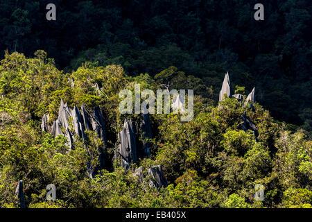 Pinnacles, karst landscape, Gunung Mulu national park, Sarawak, Malaysia - Stock Photo