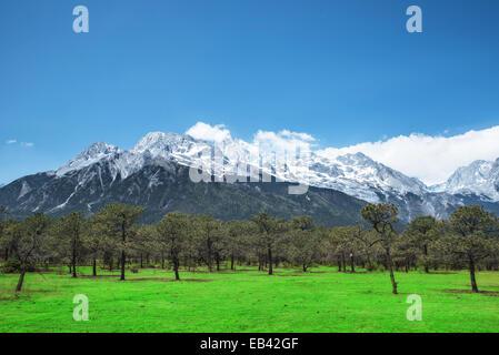 Pine forest and Jade Dragon Snow Mountain, Lijiang, Yunnan China. - Stock Photo