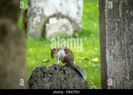 Bunhill Fields is an old burial ground in the London Borough of Islington, north of the City of London, and is a - Stock Photo