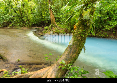 Sulphur from one stream reacts with sediment from another to form the Cerulean blue waters of the Rio Celeste in - Stock Photo