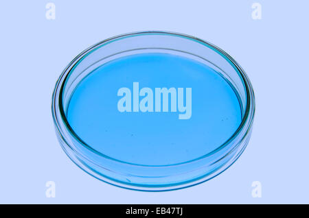 Isolated petri dish with blueish jellylike matter in a re-enacted lab situation. - Stock Photo