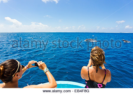 Tourists taking photos of dolphins leaping offshore of Tahiti. - Stock Photo