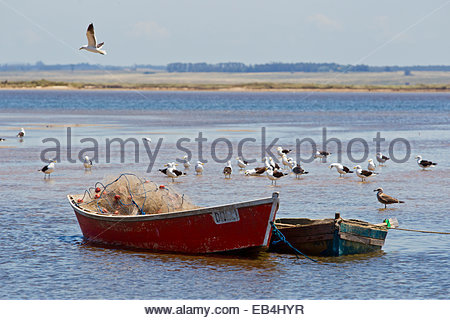 Seagulls and other shore birds hanging around a pair of simple  fishing boats. - Stock Photo