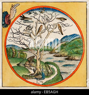 Creation Day 5 (Genesis 1:20-23), God creates all life that lives in the water and all the birds. From 'Liber Chronicarum' - Stock Photo
