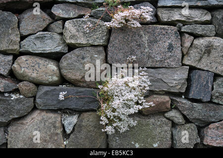From the church at Bjerager near Aarhus, Denmark - Stock Photo