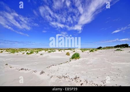 Insel Baltrum, Duenenlandschaft - Stock Photo