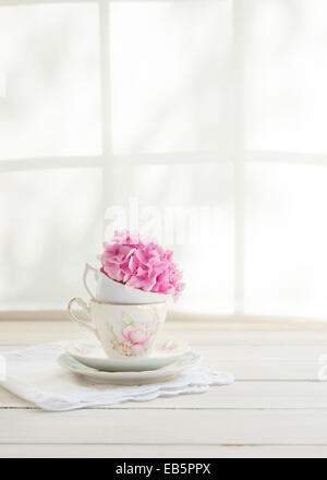 a pink hydrangea head in vintage teacups on a table by the window, light pouring in, dappled sunlight and window - Stock Photo