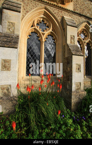 Red Hot Poker is a perennial that can remain in the same spot for several years, Priory window position protected - Stock Photo