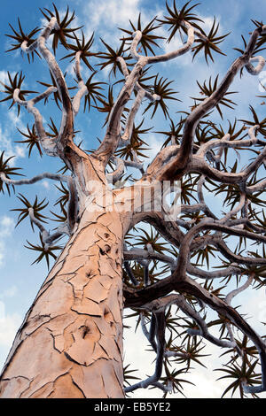 Quiver Tree (Aloe dichotoma) Forest - Keetmanshoop, Namibia, Africa - Stock Photo
