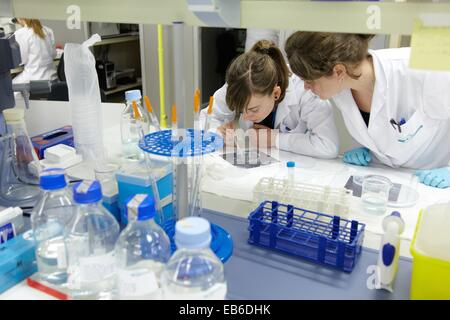Laboratory research with zebrafish Biobide is a GLP certified biotechnology company offering zebrafish screening - Stock Photo