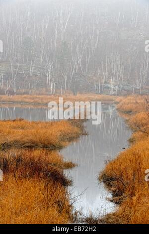Reflections in a beaver pond on a foggy day in late autumn, Greater Sudbury , Ontario, Canada - Stock Photo
