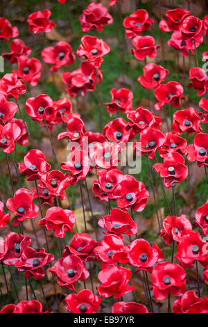 Ceramic poppies at the Blood Swept Lands and Seas of Red installation at the Tower of London, England, UK - Stock Photo