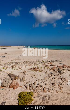 Erher, east coast, Socotra island, listed as World Heritage by UNESCO, Aden Governorate, Yemen, Arabia, West Asia. - Stock Photo