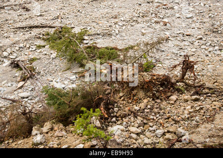 Trees knocked over by flash flooding below La Fouly in the Swiss Alps, in Val Ferret. - Stock Photo