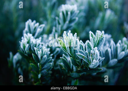 frost on the leaves - Stock Photo