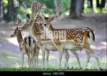 France yvelines parc naturel de la haute vallee de for Parc animalier yvelines