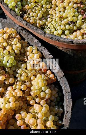 vintage celebration´12 Sant Fost de Campsentelles Catalonia Spain - Stock Photo