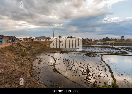 Panoramic view of typical flooded paddy fields landscape and shanty town in a suburb of Antananarivo, or Tana, capital - Stock Photo