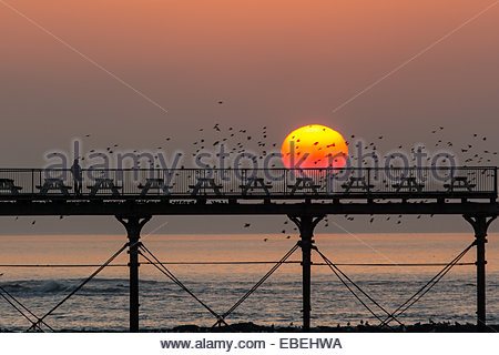 Aberystwyth, Wales, UK. 29 November, 2014. The thousands of starlings which roost each night under the pier at Aberystwyth, - Stock Photo