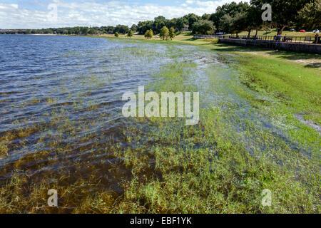 Clermont Florida Waterfront Park public Lake Minneola grass water - Stock Photo
