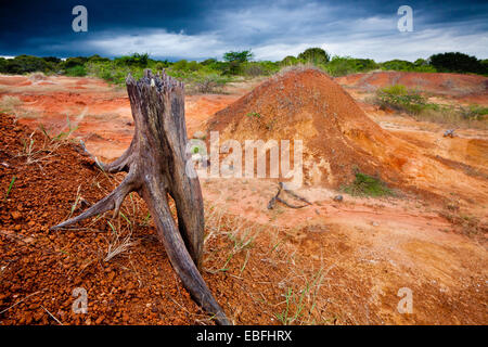 Dry tree and eroded soil in Sarigua national park (desert), Herrera province, Republic of Panama. - Stock Photo