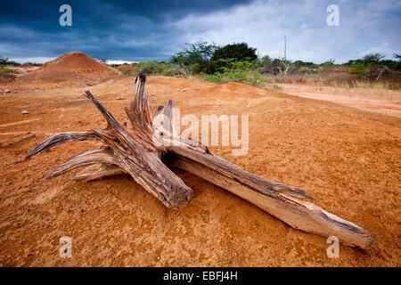 Fallen log and eroded soil in Sarigua national park (desert), Herrera province, Republic of Panama. - Stock Photo
