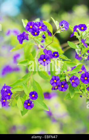 Beautiful purple violet flowers in park. - Stock Photo
