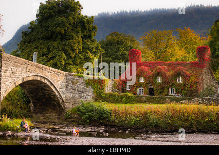 Autumn Colours: Tu Hwnt i'r Bont, riverside tearooms covered in red ivy, autumn september 2014, River Conwy, Llanrwst - Stock Photo