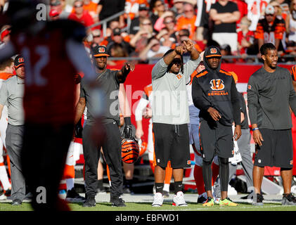 Tampa, Florida, USA. 30th November, 2014. The Cincinnati Bengals sidelines erupts as they try to signal that there - Stock Photo
