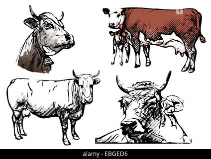 cows and bulls ullustration - Stock Photo