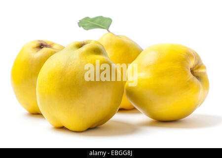 Group of ripe yellow quinces isolated on white background. - Stock Photo