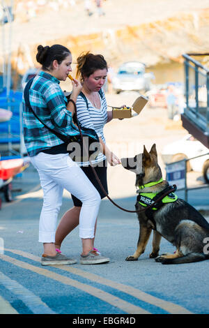 A woman feeding chips to a large Alsatian German Shepherd dog, UK - Stock Photo