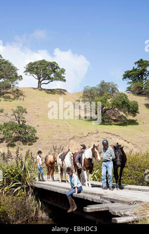 Horse riders taking break, Pakiri Beach, Auckland, New Zealand - Stock Photo