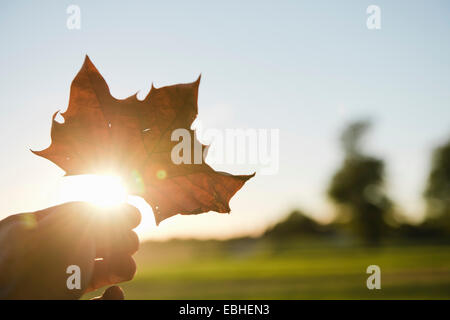 Male hand holding up autumn leaf to sunlight - Stock Photo