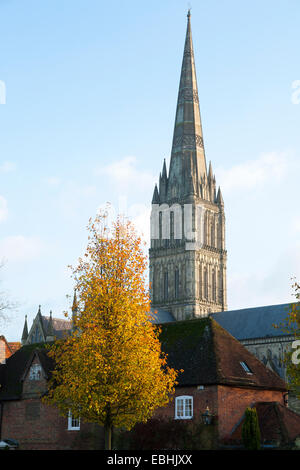 Spire of Salisbury Cathedral shown during the autumn / winter, with a tree in golden / gold late autumn leaf. Salisbury - Stock Photo