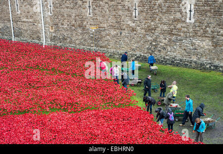 Volunteers removing the ceramic poppies at the Blood Swept Lands and Seas of Red installation at the Tower of London - Stock Photo