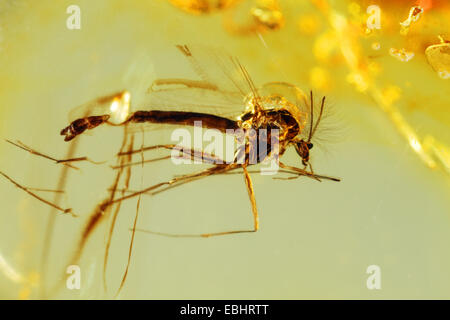 Close-up of a small insect caught in amber. From around the Baltic sea. - Stock Photo