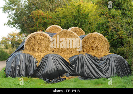 Bales of Hay Partially Covered with Black Sheeting Stacked on Cutlers Farm, near Styratford upon Avon, Warwickshire, - Stock Photo