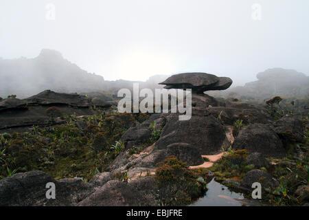 bizarr sandstone formation 'flying turtle' on Mount Roraima, Venezuela, Canaima National Park - Stock Photo