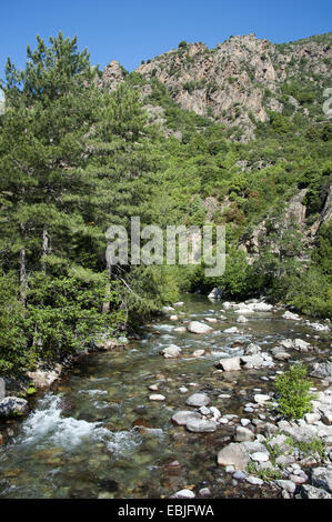 Asco river, France, Corsica - Stock Photo