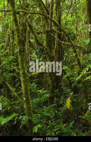 cloud forest, Colombia, Parque Ucumari - Stock Photo