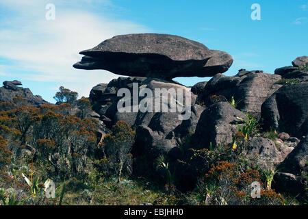 bizarr sandstone formation 'flying turtle' on Mount Roraima, Venezuela, Canaima National Park, Roraima Tepui - Stock Photo