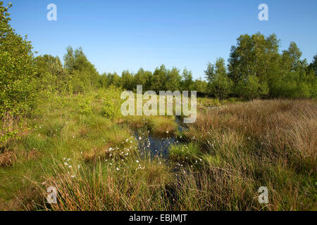 clear blue sky over a moor in May, Germany, Lower Saxony - Stock Photo
