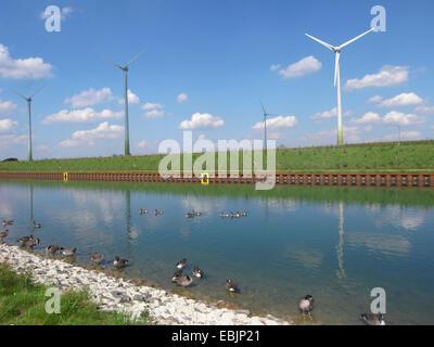 Canada goose (Branta canadensis), at Dortmund-Ems Canal with wind turbines, Germany, North Rhine-Westphalia, Ruhr - Stock Photo