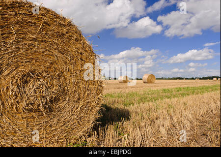 round bales of straw on a harvested field, Germany, Lower Saxony - Stock Photo