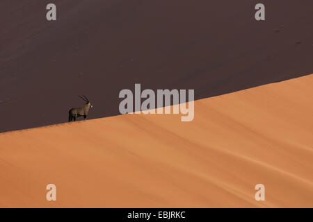 Oryx in shadow on giant sand dune, Sossusvlei National Park, Namibia - Stock Photo