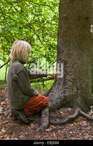 wild boar, pig, wild boar (Sus scrofa), child sitting in front of a scratching tree, indicating on the scratching - Stock Photo