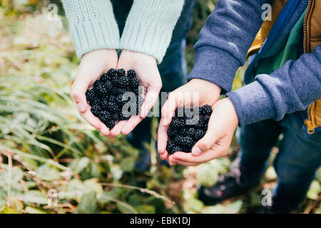 Two people holding blackberries in cupped hands - Stock Photo