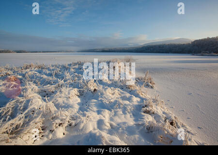animal tracks across Loch Insh in winter, United Kingdom, Scotland, Cairngorms National Park - Stock Photo