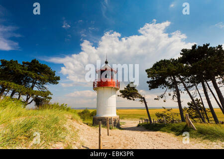 lighthouse Gellen on Hiddensee with windswept pines, Germany, Mecklenburg-Western Pomerania, Hiddensee, , Neuendorf, - Stock Photo